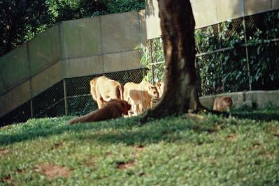 Zoo1-019.jpg