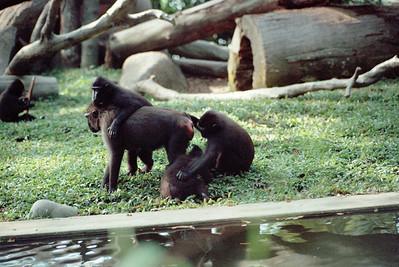 Zoo4-027.jpg