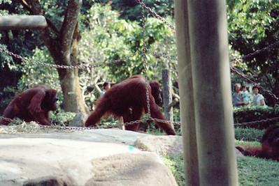 Zoo4-037.jpg