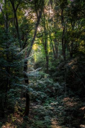 Yoyogi Woods