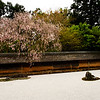 Zen Rock Garden with Cherry Blossoms at Ryōan-ji Temple