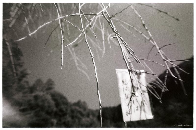 O-mikuji, good luck fortune, strip of paper - Japan hanging from tree at Kiyomizu-Dera temple, Kyoto, Japan
