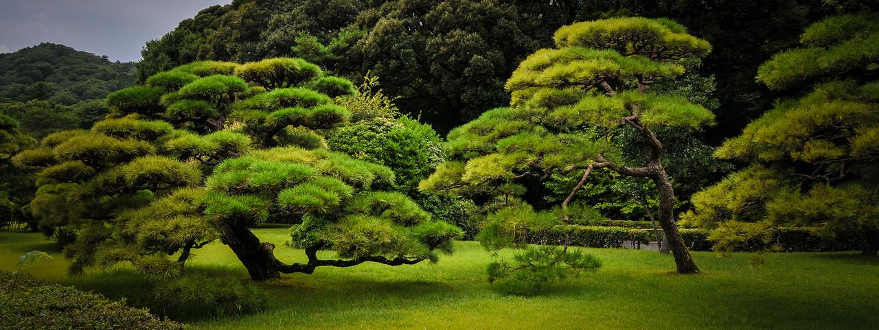 Japanese Trees