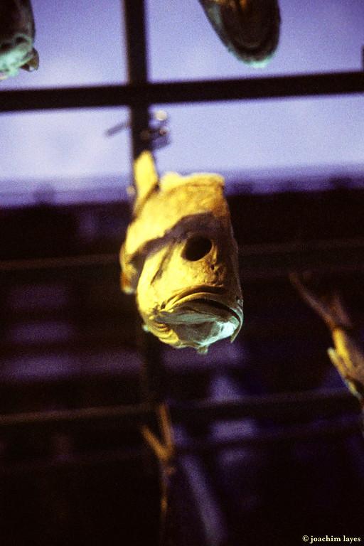 Fish hanging to dry, in Tai O Fishing Village, on Lantau Island, Hong Kong