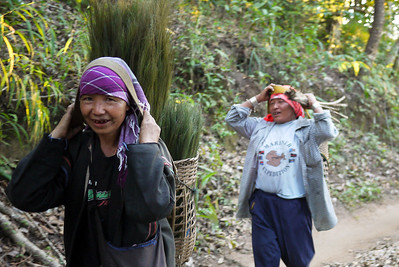 Worked return from the fields, Akha Ama coffee village near Chiang Mai, Thailand.