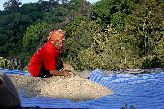 Lee's mom spreads out the bags of coffee beans so they can dry in the warm sunlight.