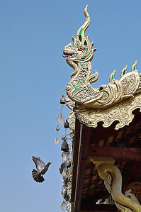 Pigeon landing on the temple in Chiang Mai, Thailand