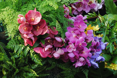 Orchids at the Chiang Mai Flower Festival, Thailand