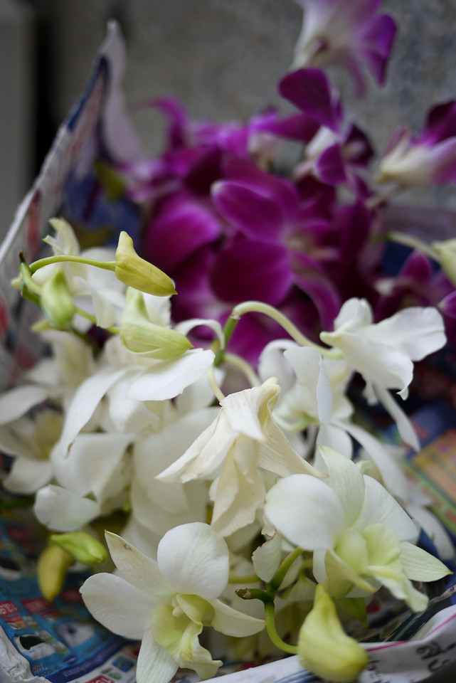 A bouquet of orchids for our handmade krathongs during Loy Krathong in Chiang Mai, Thailand