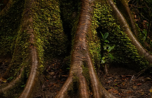 Root To Bark