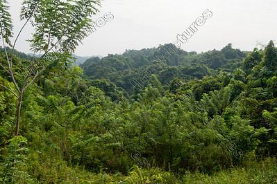 Dajak tribe,stam,tribu,Tinga Lawing,East-Kalimantan,Indonesia,Indonesië