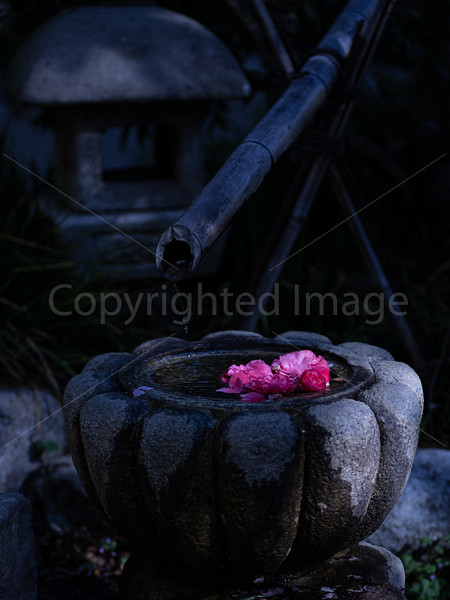 Zen Spring
