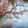 Misty Pond
