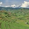 En longeant le Vietnam - Rizières en herbe