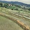 Les rizières de Qingkou - 箐口梯田