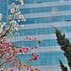 Kunming - L'installation du printemps - 昆明
