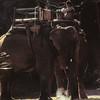 Une balade à dos d'éléphant dans la forêt de Gokarna