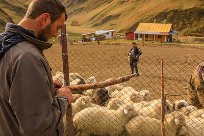 counting sheep in Girevi