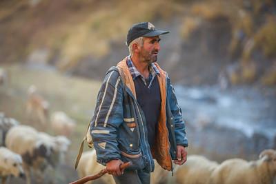 fellow shepherd