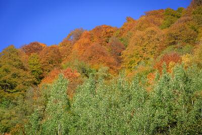autumn vegetation at sundown