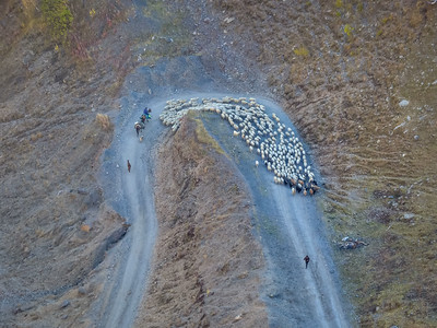 sheep on serpentine at Abano Pass