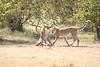 Cheetah_Cubs_Mara_Kenya_Asilia_20150050