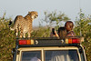 Cheetah_Family_Vehicle_Mara_Kenya_Asilia_20150021