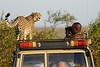 Cheetah_Family_Vehicle_Mara_Kenya_Asilia_20150020