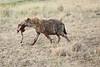 Hyena_Kenya_2015_Asilia_0017