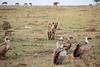 Hyena_Kenya_2015_Asilia_0020