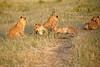 Lion_Cubs_Family_MaraNorth_Kenya_2015_Asilia_0041