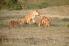 Lion_Cubs_Family_MaraNorth_Kenya_2015_Asilia_0015