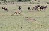 Cheetah_TopiHouse_Mara (12)