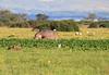 Hippo Loldia House Kenya
