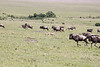Cheetah Brothers Wildebeest Mara Rekero