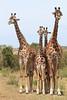 Giraffe Mara Topi House