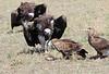 Lappet-faced Vulture and Tawny Eagle Topi House Mara