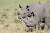 Black Rhino Mara Rekero