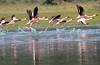 Flamingo Loldia House Kenya