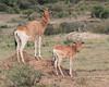 Topi Family Mara
