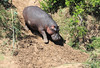 Hippo Mara Topi House