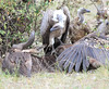 Vultures at Kill Mara Topi House