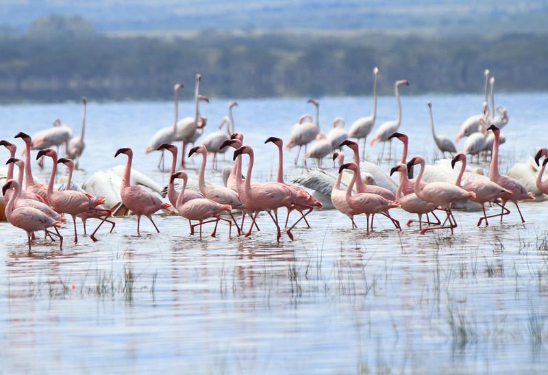 Flamingo Loldia House Kenya Lake Naivasha