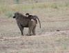 Baboon with Baby Mara