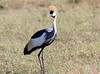 Crowned Crane Mara Topi House
