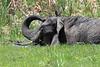 Elephant Mara Topi House
