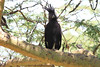 Long-crested Eagle Mara Topi House