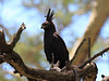 Long-crested Eagle Mara Topi House
