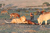 Lion Family Mara Topi House with Hyena