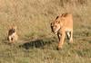 Lion Cub Family Mara Topi House